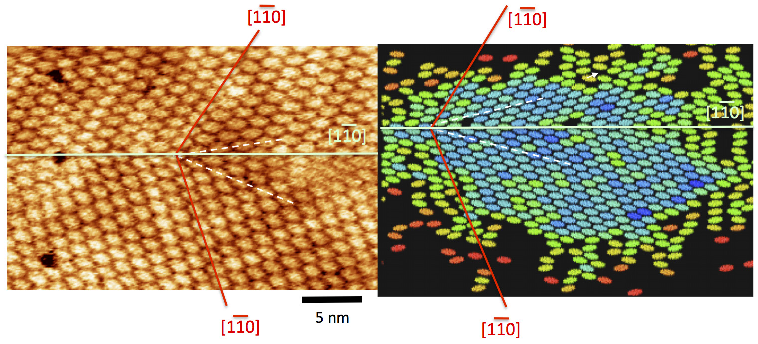 Chiral domains of self-assembled DIP in metal surfaces