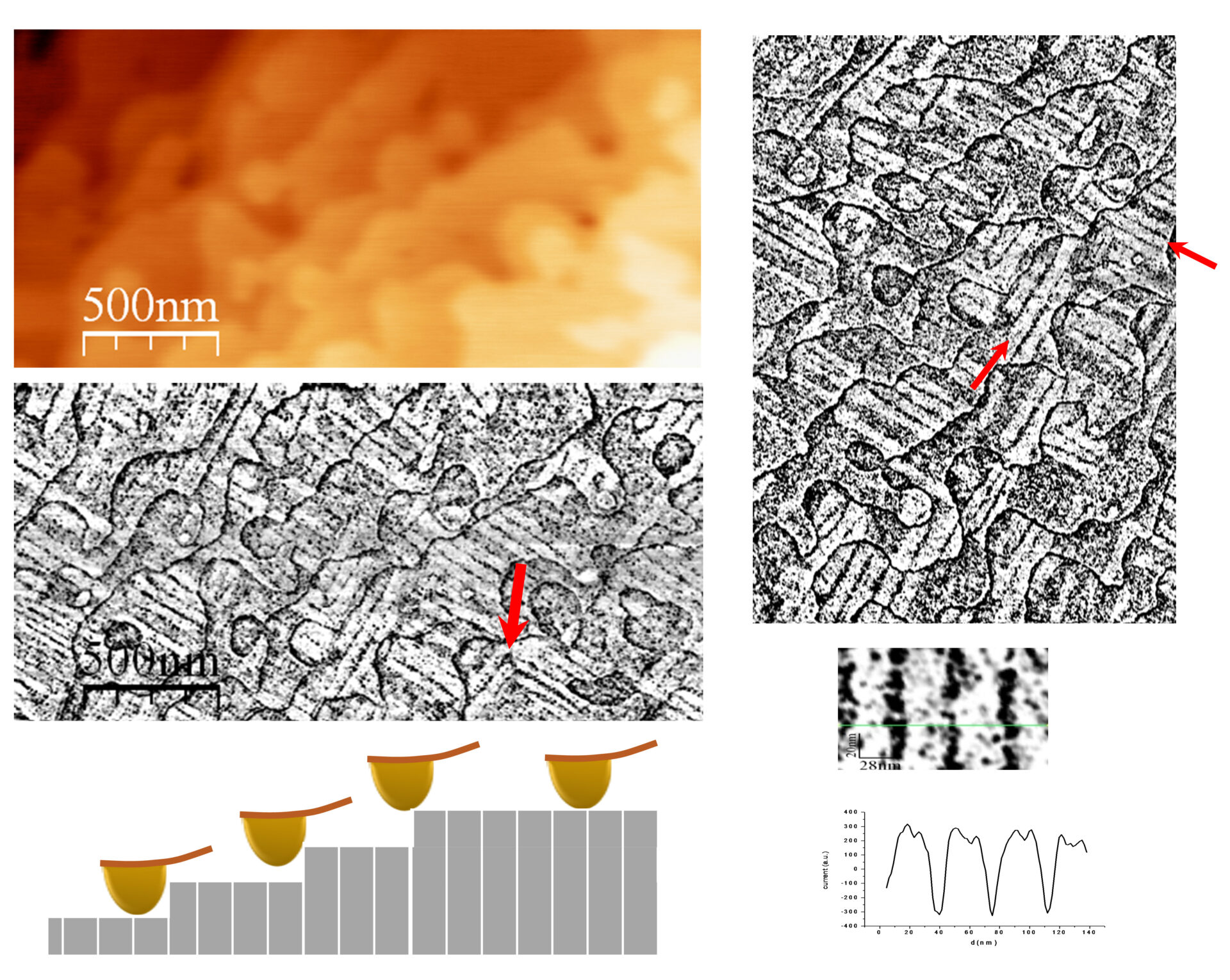 Conduction in twin walls of LSMO thin films